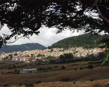 panorama Floresta